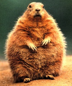 groundhog-enorme-toute-grosse-253x300