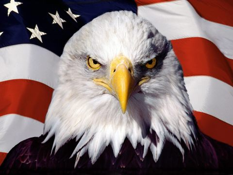 awesome-american-eagle