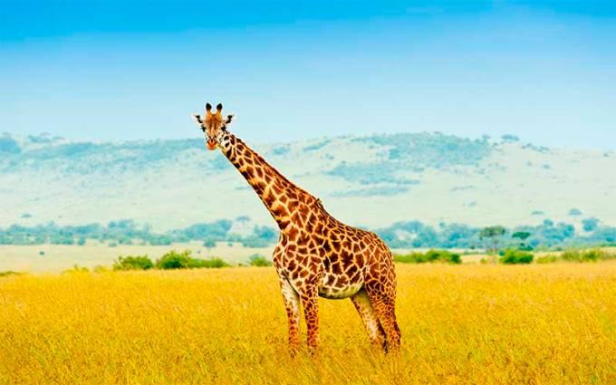 Masai_species.jpg
